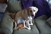Tiêm vaccine phòng dại chó, mèo cắn phải kiêng rượu, bia 6 tháng