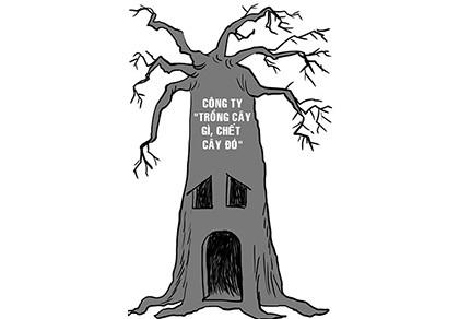 Trồng cây gì chết cây đó