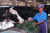 Ngành sữa Việt Nam trước áp lực TPP