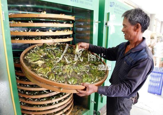 Một bông Thanh Long giá hơn 10.000 đồng