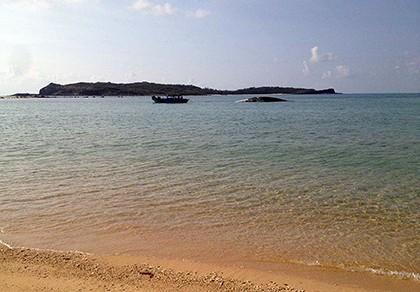 Phát hiện cá voi nặng hơn 10 tấn gần đảo Phú Quý