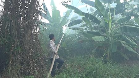 Đám cháy 13,8 ha rừng U Minh Hạ đã được khống chế