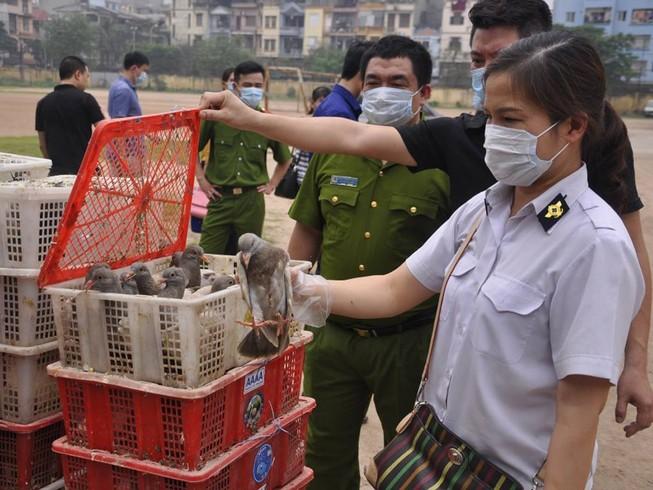 Bắt giữ 4.000 con chim bồ câu nhập lậu từ Trung Quốc