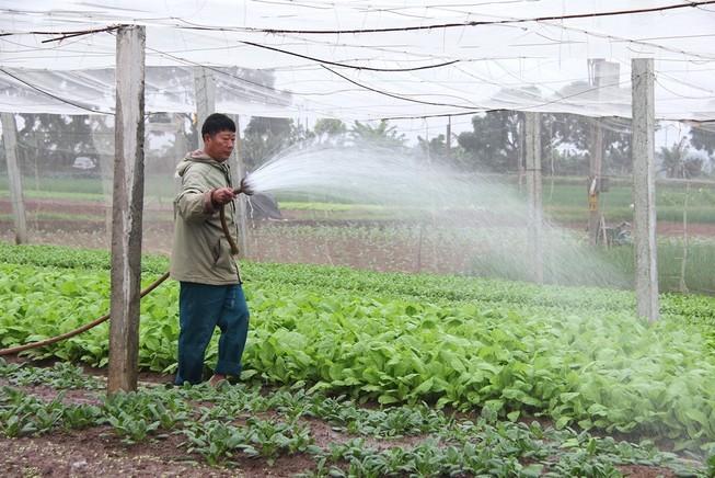Về vùng đất cung cấp rau sạch lớn nhất Hà Nội