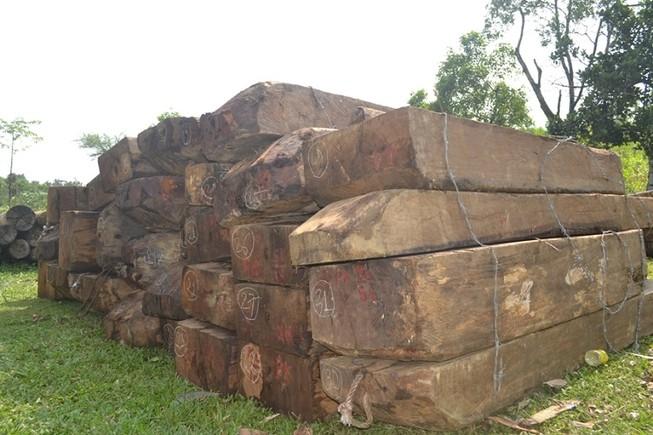 Bắt thêm hai nghi can trong đường dây phá rừng đặc dụng Bà Nà – Núi Chúa