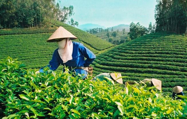 Chè, cà phê, trái cây khó cạnh tranh thị trường quốc tế