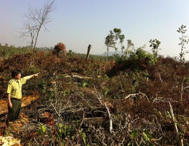 Đắk Nông kỷ luật một loạt cán bộ kiểm lâm để mất rừng