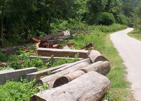 Một người dân bị gỗ đè chết khi chở gỗ ra khỏi rừng