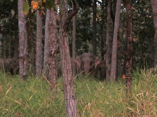 Lần đầu tiên quay phim được đàn voi rừng Yok Don