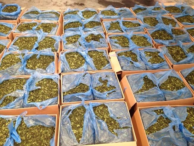 Bắt lô lá cây lạ chứa ma túy cực mạnh tại sân bay Tân Sơn Nhất