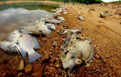 Cá chết xếp lớp ở hồ Phước Hà gây ô nhiễm nghiêm trọng