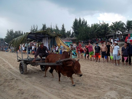Độc đáo cuộc đua xe bò trên bãi biển ở La Gi