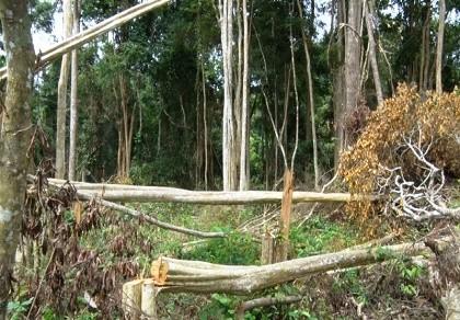 Khởi tố trùm giang hồ trang bị 'hàng nóng' đi phá rừng