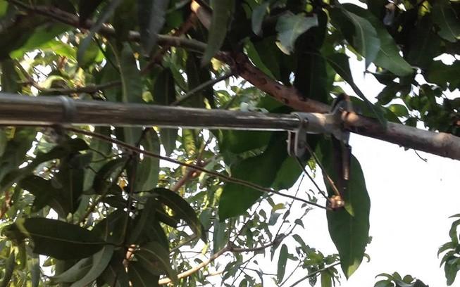 Đi chặt cây bị cành cây đâm thủng bụng