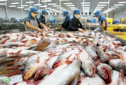 Thái Lan 'chuộng' cá tra Việt Nam