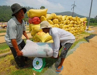 Tiêu thụ lúa gạo qua hợp đồng chỉ thành công 20%