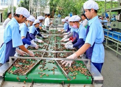 Hạt điều Việt Nam chiếm 50% thị phần thế giới