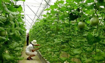 Vốn Nhật đổ mạnh vào nông nghiệp Việt Nam