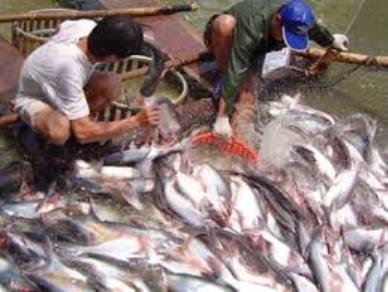 Diện tích nuôi cá, tôm đang có nguy cơ bị thu hẹp