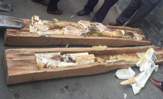 Tiếp tục phát hiện nhiều ngà voi châu Phi giấu trong gỗ