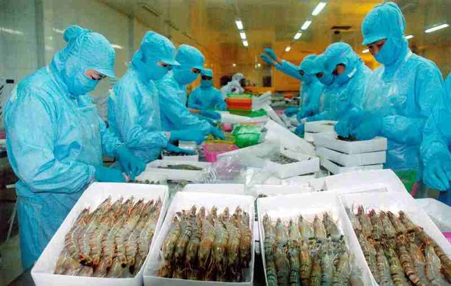 """Tôm Việt xuất khẩu EU dính """"nghi án"""" gian lận xuất xứ"""