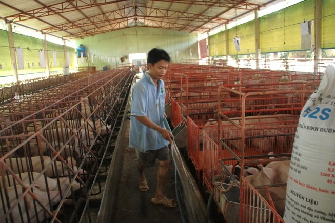 Người nuôi heo mất 30.000 tỉ, khẩn cấp 'giải cứu'