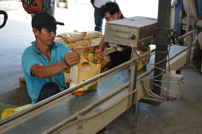 Cơ hội trúng thầu bán 250.000 tấn gạo sang Philippines
