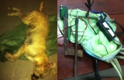 Tạm giữ ba nghi can bắn chết người bị nghi trộm chó