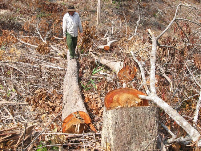 Kiểm tra phó chủ tịch huyện có dấu hiệu tiếp tay phá rừng
