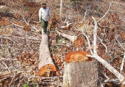 Vụ phá 110 ha rừng: Bắt giam cháu một nguyên bí thư huyện