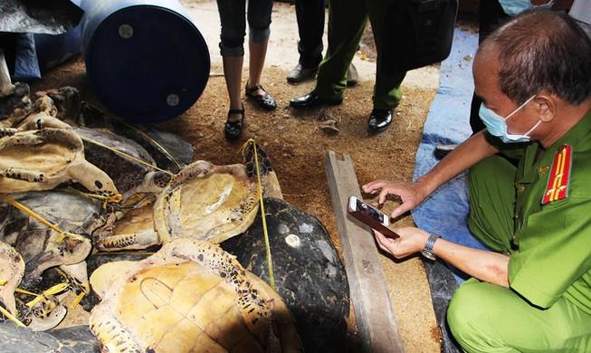 Hoãn xử vụ tàng trữ xác rùa biển lớn nhất thế giới