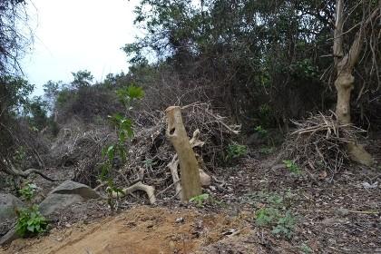 Tạm đình chỉ năm cán bộ kiểm lâm sau vụ xâm phạm rừng Sơn Trà