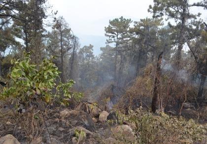 Cháy rừng Hải Vân, gần 600 người nỗ lực dập lửa