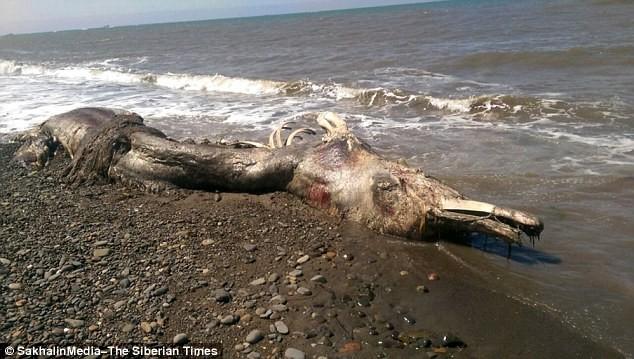 Sinh vật lạ 'cá heo mỏ chim' trôi vào bờ biển Nga