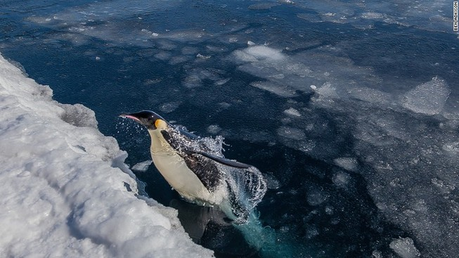 Tảng băng khổng lồ 'bẫy chết' 150.000 chim cánh cụt
