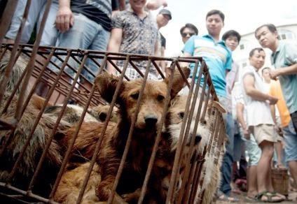 Trung Quốc cam kết 'dẹp tiệm' lễ hội thịt chó