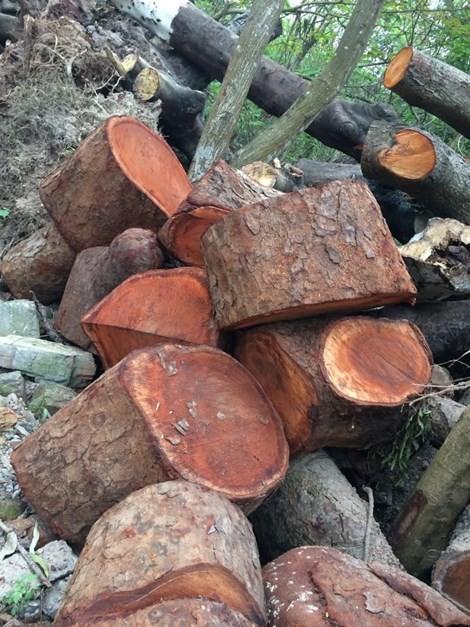 Hà Nội công bố mức kỷ luật cán bộ trong vụ chặt cây xanh