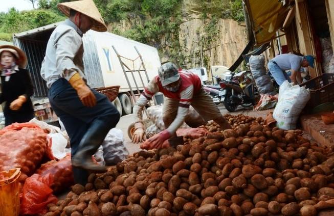 Cấm nhập khoai tây Trung Quốc về chợ nông sản Đà Lạt