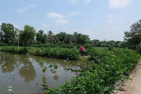 Kiến nghị giao Bitexco xây hai cây cầu vào bán đảo Thanh Đa