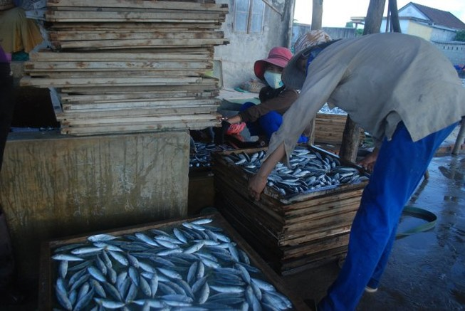 Quảng Trị: Phát hiện cá nục đông lạnh có chất cực độc, tuyệt đối cấm