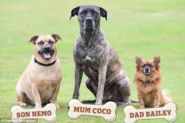 Sự thật... bất ngờ phía sau bức ảnh gia đình 3 chú chó