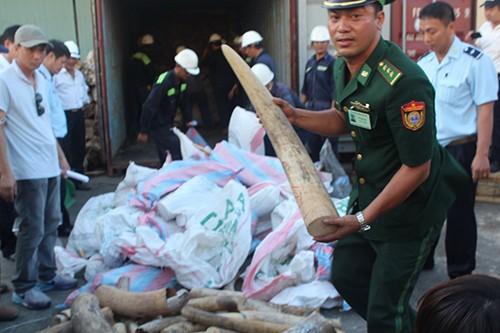 Cận cảnh ba container chứa hơn 2,2 tấn ngà voi ở Đà Nẵng