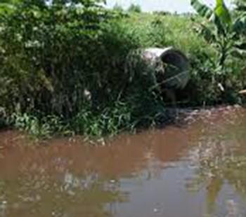 Trung tâm Chế biến gia súc gia cầm Đà Nẵng bị phạt 300 triệu đồng