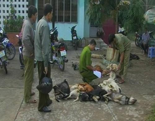 Tạm giữ ba thanh niên chở 27 con chó bị đánh bả