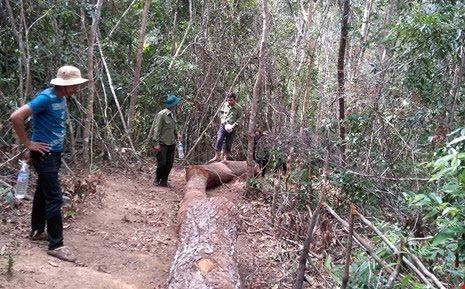 Bảo vệ rừng dựng chuyện 20 lâm tặc tấn công, cướp gỗ