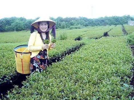 Thi thể doanh nhân Hà Linh chưa được đưa về nước