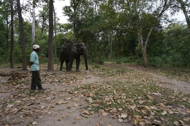 Giám đốc Vườn Yok Don than khó quản lý rừng