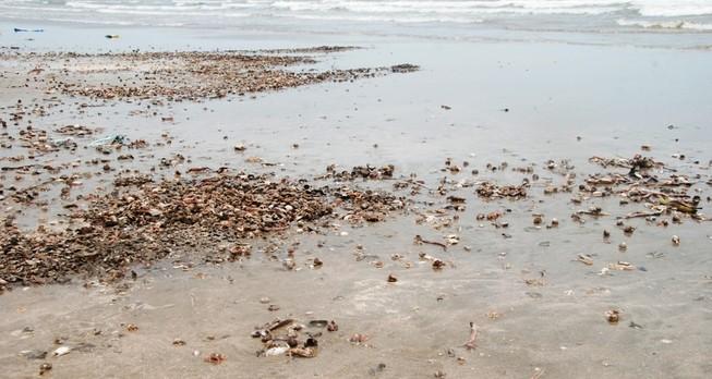 Nghiêm cấm sử dụng, kinh doanh, tiêu thụ thủy hải sản chết bất thường
