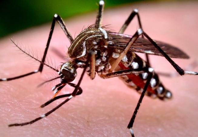 Phát hiện về muỗi vằn mang virus Zika lưu hành ở VN