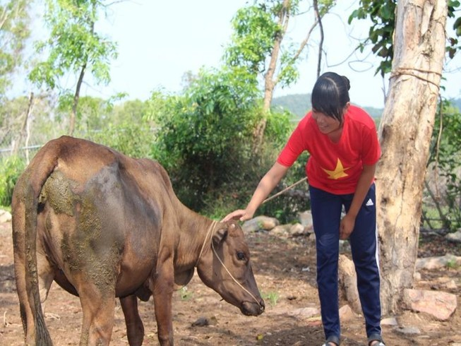 Em Sơn Thị Trâm đã được tặng bò giống